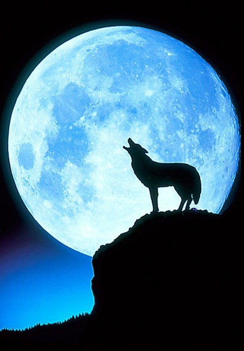 Cartoon-Wolf-Howling-at-Moon